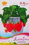 Gardens The Four Seasons of Strawberry Seeds 100pcs only Original Pack Photo, best price $7.83 new 2020