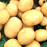 Rare Ukrainian Organic Vegetable True Potato Seeds asol, Early Solanum tuberosum Photo, best price $1.98 new 2020