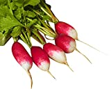 Radish French Breakfast USDA Certified Organic Vegetable Seed - 1,000 Seeds Photo, best price $4.99 new 2020