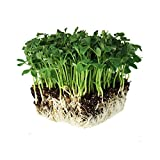 Speckled Pea Sprouting Seeds - 1 Lbs - Certified Organic, Non-GMO Green Pea Sprout Seeds - Sprouts & Microgreens Photo, best price $13.22 new 2020