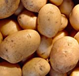 SEED POTATOES - 1 lb. Charlotte * Organic Grown * Non GMO * Virus & Chemical Free * Ready for Spring Planting * Photo, best price $11.19 new 2020