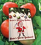 Homegrown Tomato Seeds, 300, Rutgers Tomato Photo, best price $5.69 new 2020