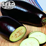 Black Beauty Eggplant Seeds - 150 Seeds Non-GMO Photo, best price $1.79 new 2020