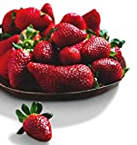 Organic Surecrop Strawberry 315 Seeds UPC 600188194753 + 1 Free Plant Marker - Low-Maintenance Photo, best price $4.99 new 2020