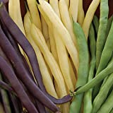Burpee Three Color Blend Bush Bean Seeds 2 ounces of seed Photo, best price $6.89 new 2020