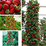 Red 300 pcs Strawberry Climbing Strawberry Fruit Plant Seeds Home Garden New Photo, best price $1.79 new 2020