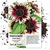 Seed Needs, Cherry Rose Sunflower (Helianthus annuus) 50 Seeds Photo, best price $5.85 new 2020