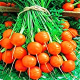 Seeds Sweet Carrot Paris Market Red Organic Heirloom Ukraine for Planting Photo, best price $6.99 new 2020