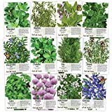 Non-GMO Culinary Herb Seed Collection, 12 Individual Seed Packets Incl. 4,000+ Seeds Collectively (Sage, Basil, Chives, Cilantro, Rosemary, Dill, Marjoram, Oregano & More!) Seeds by Seed Needs Photo, best price $42.00 new 2020