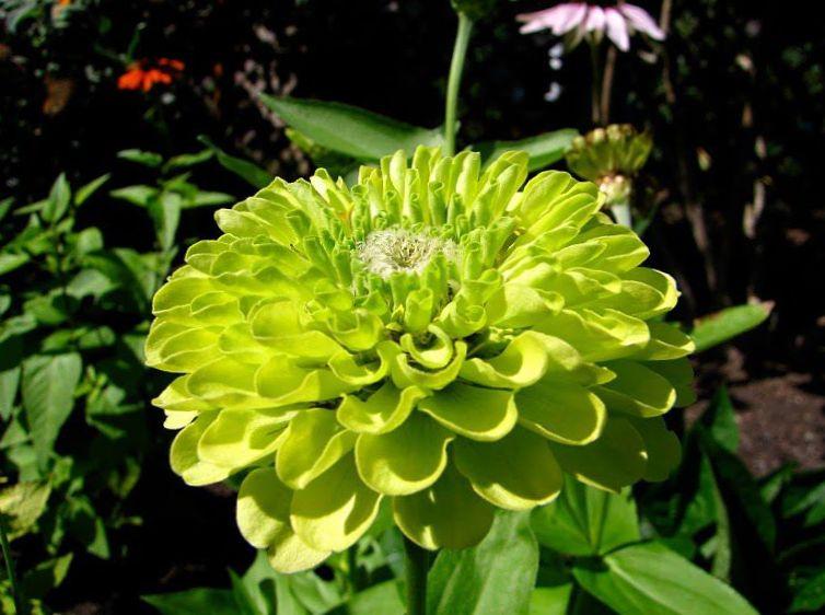 любой коллекции цветы зеленого цвета в саду фото потери пульса
