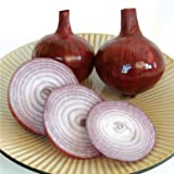 David's Garden Seeds Onion Red Bull KL2498 (Red) 200 Hybrid Seeds Photo, best price $8.45 new 2019