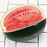Watermelon Black Diamond Great Heirloom Vegetable By Seed Kingdom BULK 1,000 Seeds Photo, best price $12.69 new 2019
