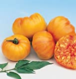 David's Garden Seeds Tomato Beefsteak Striped German SV2372 (Orange) 50 Non-GMO, Organic, Heirloom Seeds Photo, best price $6.95 new 2019