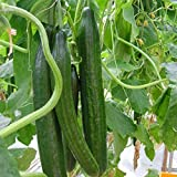 20pcs Cucumber Vegetable Seeds, Organic Vitamin Suffolk Herbs Cucumber, for Salad Photo, best price $4.90 new 2019