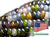 Glass Gem Corn Seeds (100 Seeds) - USA Grown by PowerGrow Systems Guaranteed to Grow Photo, best price $5.25 new 2019