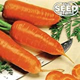 Chantenay Red Core Carrot Seeds - 250 Seeds Non-GMO Photo, best price  new 2019