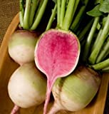 David's Garden Seeds Radish Red Meat (Watermelon) 6247 (Red) 200 Non-GMO, Open Pollinated Seeds Photo, best price $7.95 new 2019
