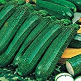 IDEA HIGH Kings Seeds - Courgette Ambassador F1-15 Seeds Photo, best price $7.14 new 2019