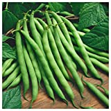Everwilde Farms - 1 Lb Blue Lake Bush Green Bean Seeds - Gold Vault Photo, best price $8.00 new 2019