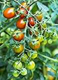 Moby Grape Tomato Seed Photo, best price $6.99 new 2019