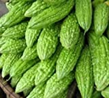 Philippine Dept. of Agriculture Ampalaya 20 Seeds Bitter Melon Vegetable Photo, best price $10.00 new 2019