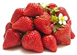 Homegrown Strawberry Seeds, 225, Organic Delizz Photo, best price $5.07 new 2019