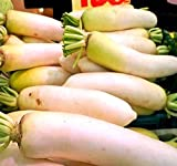 BIG PACK - (3,000) Japanese Daikon - Daikon Radish Seeds - Japanese Radish - Non-GMO Seeds by MySeeds.Co (BIG PACK - Daicon Radish) Photo, best price $9.95 new 2019