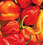 Habenero Hot Peppers Seeds (Super Hot), 25+ Premium Heirloom Seeds, 94% Germination, ON Sale!, (Isla's Garden Seeds), Non GMO, Highest Quality! Photo, best price $5.99 new 2019