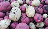 Simply Seed - Grow Bag Seed Mix - Certified Organic - 10 Tuber - Red Pontiac and Yukon Gems Photo, best price $12.99 new 2018