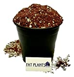 Fat Plants San Diego Succulent Soil Gallon Photo, best price $14.99 new 2019
