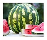 David's Garden Seeds Fruit Watermelon Crimson Sweet OS2133 (Red) 50 Non-GMO, Heirloom Seeds Photo, best price $7.95 new 2019