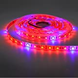 5050 Super Bright Aquarium Coral LED Strip Light 5M 300LEDs Spool Waterproof LED Plant Grow String Lights DC 12V Blue + Red Color String light (5Red 1Blue) Photo, best price $14.99 new 2019