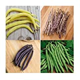 David's Garden Seeds Collection Set Bean Bush 5555 (Multi) 4 Varieties 400 Seeds (Non-GMO, Open Pollinated, Heirloom, Organic) Photo, best price $18.95 new 2019
