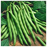 Everwilde Farms - 1 Lb Provider Green Bean Seeds - Gold Vault Photo, best price $8.00 new 2019