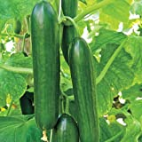 Mid-Eastern Beit Alpha Cucumber Seeds by Stonysoil Seed Company Photo, best price $8.15 new 2019