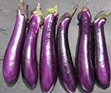 David's Garden Seeds Eggplant Purple Shine 9162 (Purple) 50 Non-GMO, Hybrid Seeds Photo, best price $7.95 new 2019