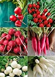 David's Garden Seeds Collection Set Radish Open Pollinated OI1353 (Multi) 6 Varieties 1800 Seeds (Non-GMO, Open Pollinated, Heirloom, Organic) Photo, best price $20.95 new 2019