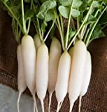 David's Garden Seeds Radish White Icicle UY1277 (White) 200 Organic Heirloom Seeds Photo, best price $7.95 new 2019