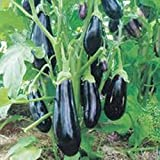 NIKITOVKASeeds - Eggplant - Aubergine Almaz - 100 Seeds - Organically Grown - NON GMO Photo, best price $1.29 new 2019