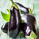 David's Garden Seeds Eggplant Black Beauty SL2470 (Black) 50 Non-GMO, Heirloom Seeds Photo, best price $6.95 new 2019