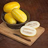 David's Garden Seeds Fruit Melon San Juan DY3415 (Yellow) 25 Non-GMO, Hybrid Seeds Photo, best price $9.95 new 2019