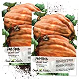 Seed Needs, Atlantic Giant Pumpkin (Cucurbita maxima) Twin Pack 10 Seeds Each NON-GMO Photo, best price $9.45 new 2019