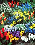 A Complete Spring Garden - 50 Bulbs for 50 Days of Continuous Blooms Photo, best price $15.00 new 2019