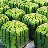 50pcs Square Watermelons Seeds, Rare Sweet Oganic Fruit Seeds for Farm Garden Spring Summer Planting Photo, best price $4.13 new 2019