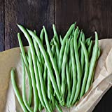 Blue Lake Bush Bean 274 Seeds - 1 Lbs - Treated, Non-GMO, Heirloom, Open Pollinated - Vegetable Garden Seeds - Green String Beans Photo, best price $9.76 new 2019