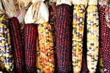 Indian Corn Seed by Stonysoil Seed Company Photo, best price $7.95 new 2019