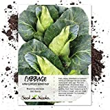 Seed Needs, Early Jersey Wakefield Cabbage (Brassica oleracea) 300 Seeds Non-GMO Photo, best price $2.50 new 2019
