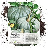 Package of 20 Seeds, Blue Jarrahdale Pumpkin (Cucurbita maxima) Non-GMO Seeds by Seed Needs Photo, best price $7.85 new 2019