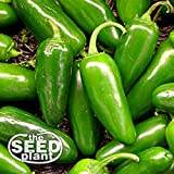 Jalapeno M Pepper Seeds - 200 Seeds NON-GMO Photo, best price $1.95 new 2020