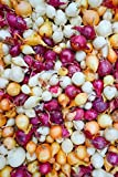 Onion Sets Red,Yellow,White or Mix (40-60 bulbs) Pick color, Garden Vegetable(Red) Photo, best price $3.49 new 2019
